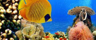 Египет, дайвинг, красное море