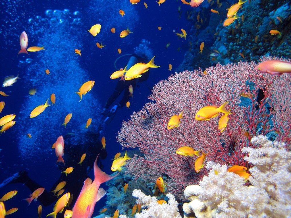 Дайвинг, Египет, Красное море, коралловый риф